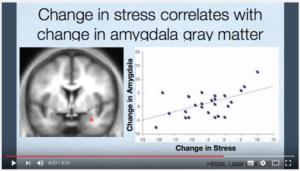 Amygdale (cerveau) et stress