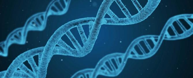 méditation veillissement stress ADN